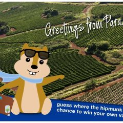 The Agony and the Ecstasy:  Booking a Trip with Hipmunk