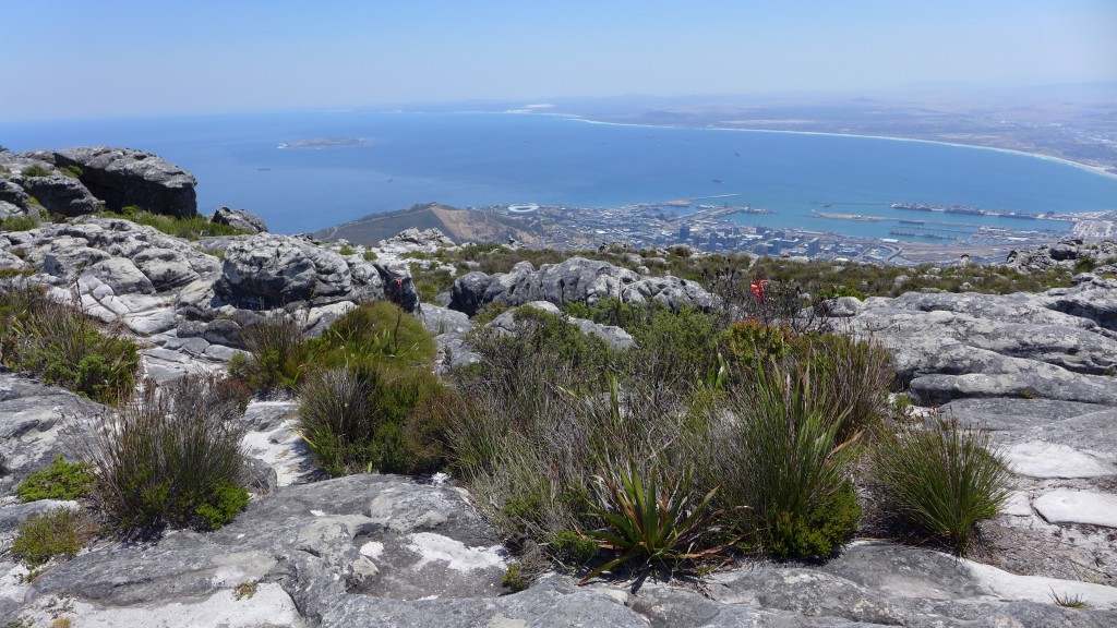 A local tour guide will tell you about different things like the unique plants on Table Mountain