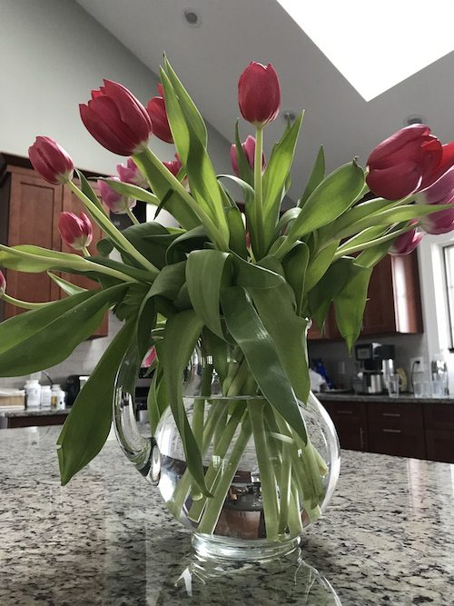 tulips in a pitcher in a kitchen - keep cut flowers in water that's clear