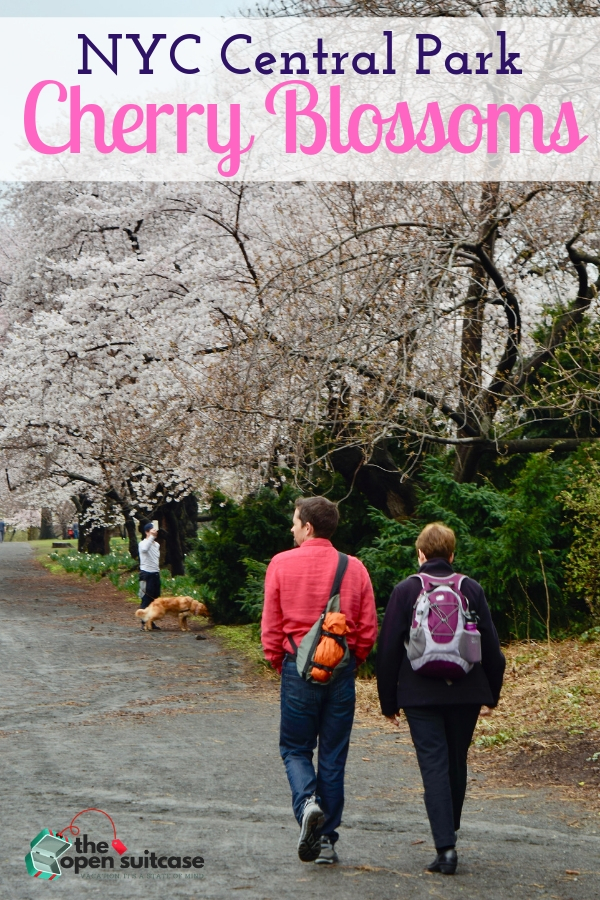 Everything you need to know to enjoy Cherry Blossom season in New York's Central Park. Plus info about guided tours to get the most out of your visit to NYC in spring!