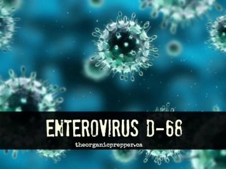 Enterovirus_D68_photo