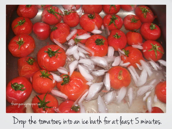 Drop the tomatoes in an ice bath