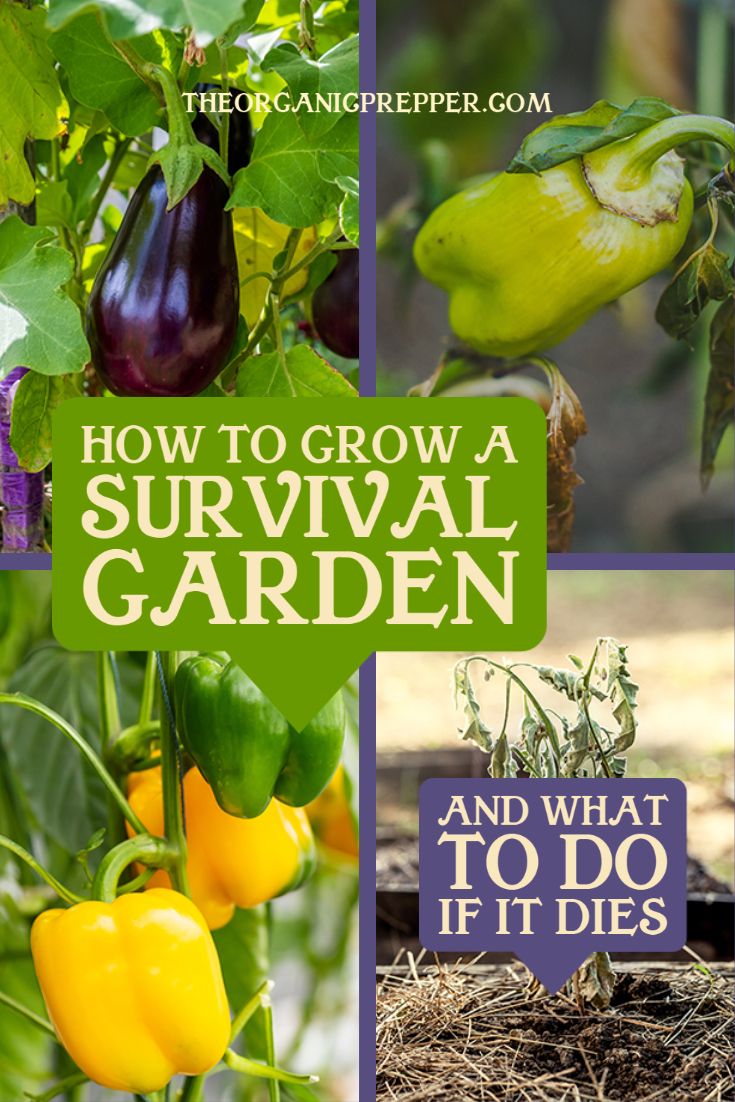 How to Grow a Survival Garden (and What to Do if it Dies)