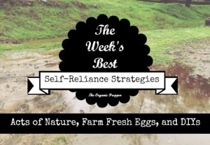 3 10 Self Reliance Strategies