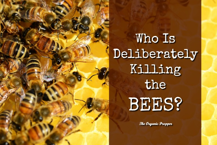 Who Is Deliberately Killing the Bees…and Why?