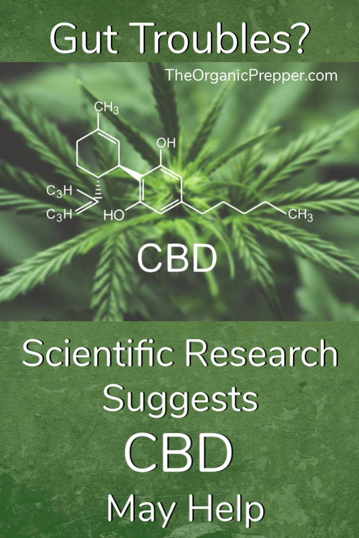 You have probably heard that cannabidiol - commonly known as CBD - offers a wide range of health benefits, but did you know that it can reduce inflammation and improve gut health? | The Organic Prepper