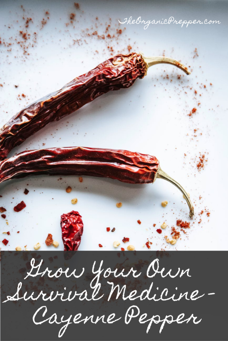 Grow Your Own Survival Medicine: Cayenne Pepper