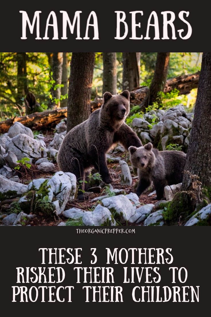 Read the survival stories of these three mothers who risked their lives to protect their children from danger. Never get between a mama bear and her cubs! | The Organic Prepper