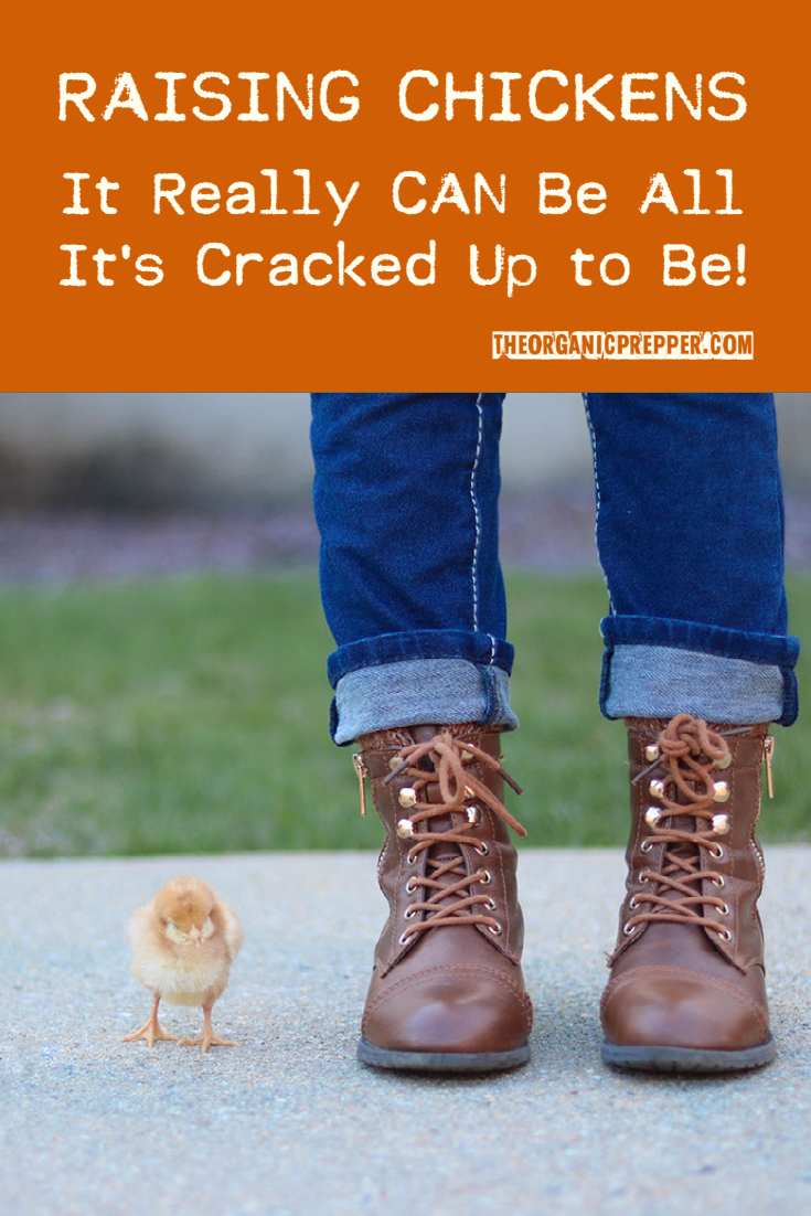 Raising Chickens: It Really CAN Be All It\'s Cracked Up to Be