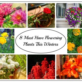 8 Must Have Flowering Plants in Your Garden This Winters in India