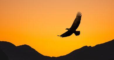 Annika Jayne The Eagle Flies Alone cover