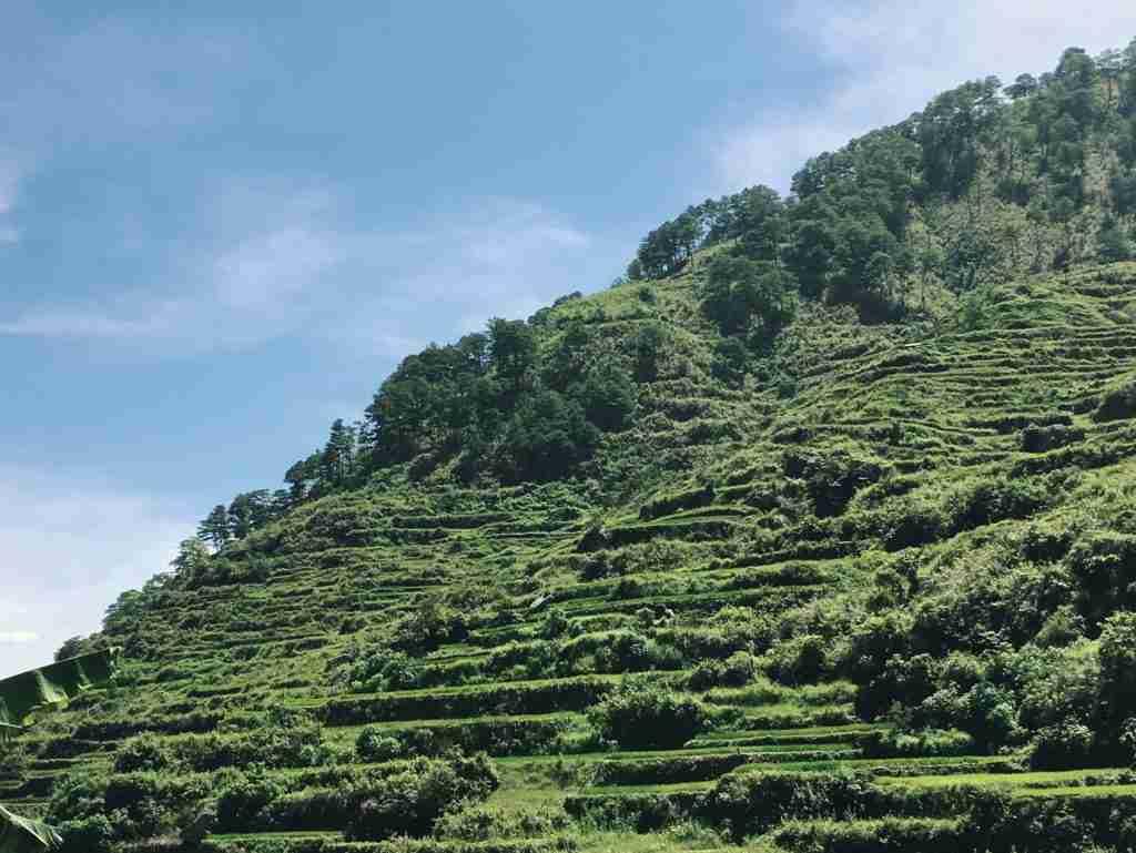 sagada green rice terraces
