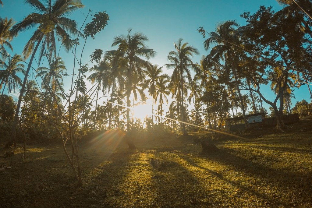 coconut trees and the sun in the mountain