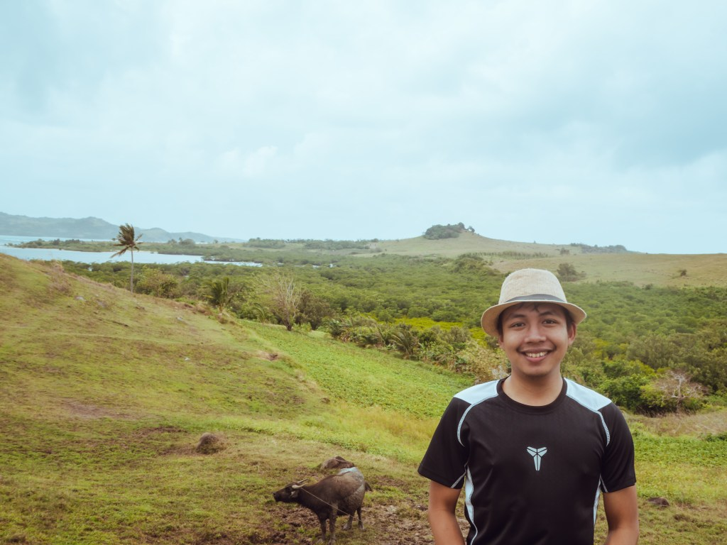 green grassland with cows in guinahoan, caramoan islands