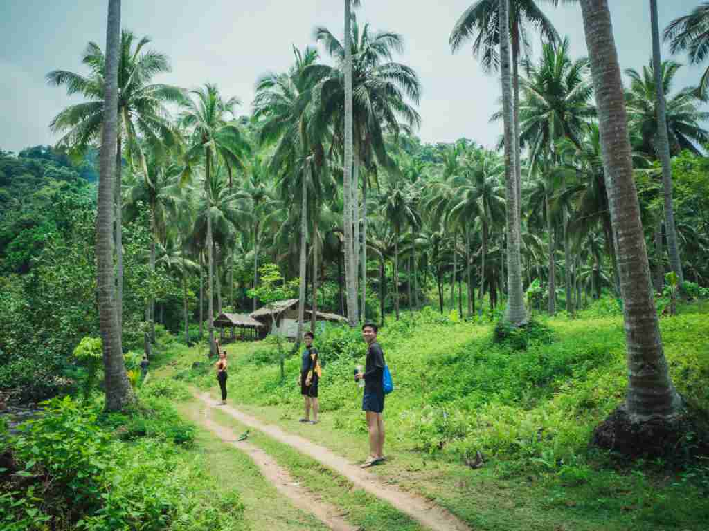 coconut trees in real quezon