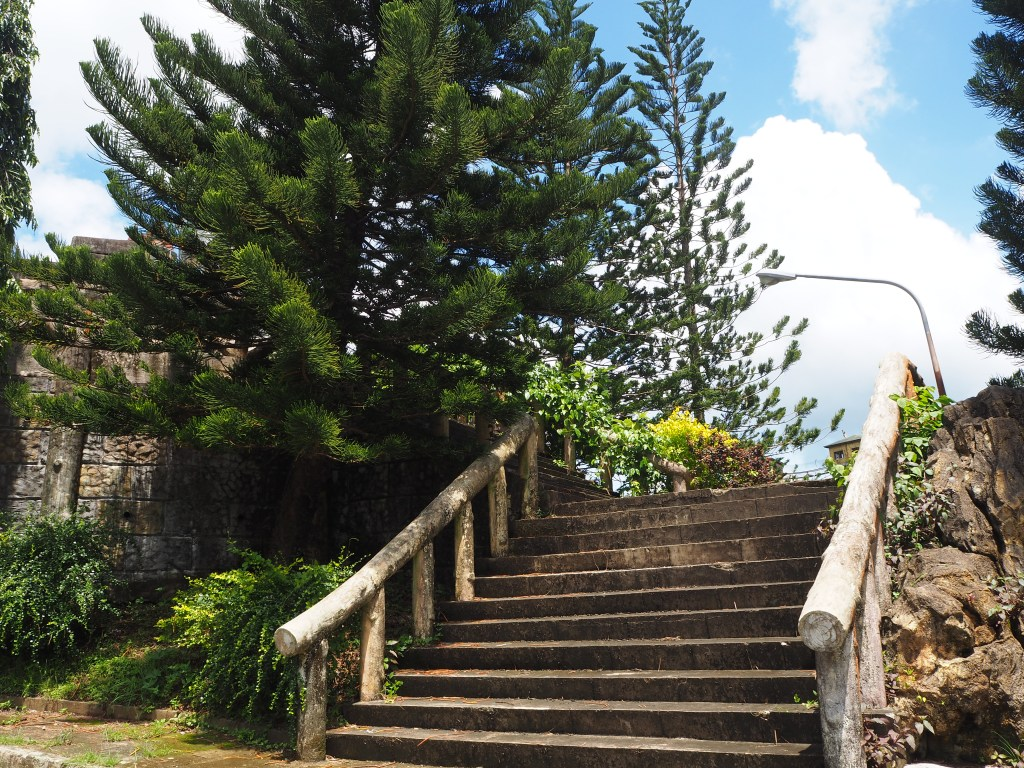 stairs and pine trees fantasy world in lemery batangas
