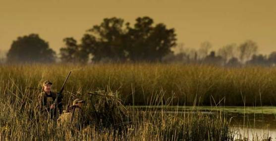 Duck shooting in Argentina