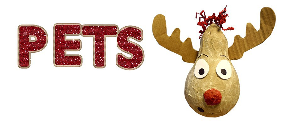 pet holiday gift guide blog blogs presents dogs cats birds ideas outspoken yam