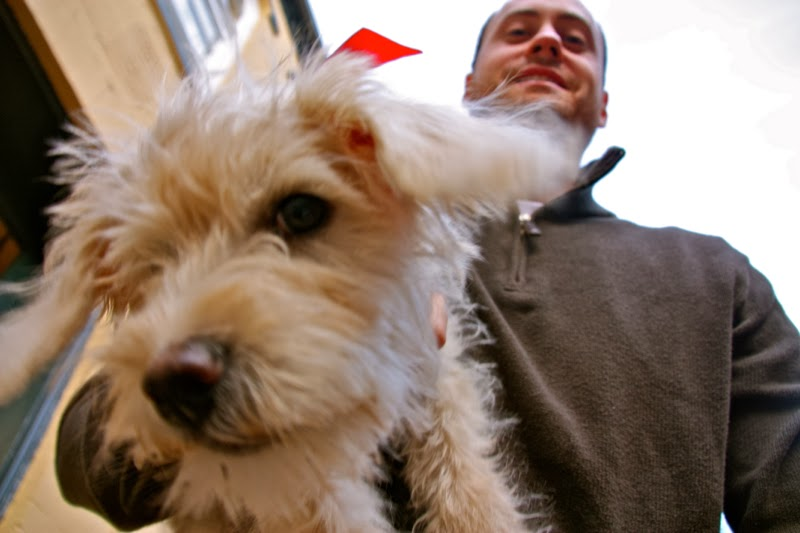 Christmas-Schnoodle14