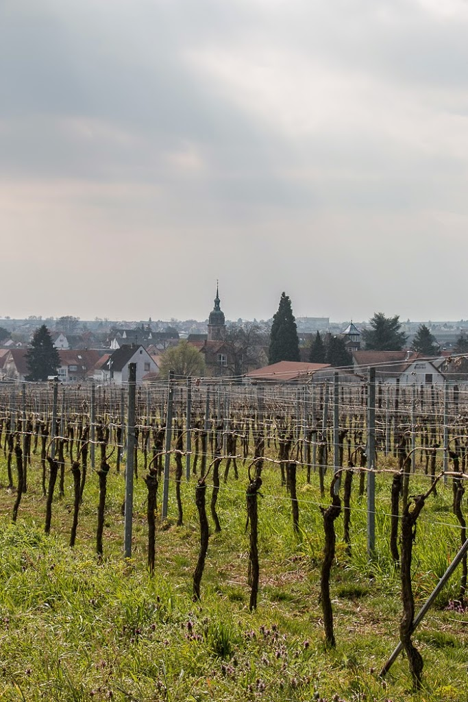 Wine-Country-10