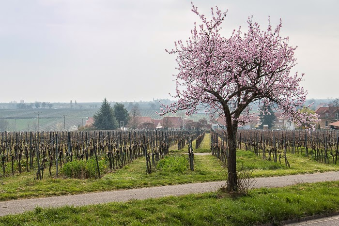 Wine-Country-11