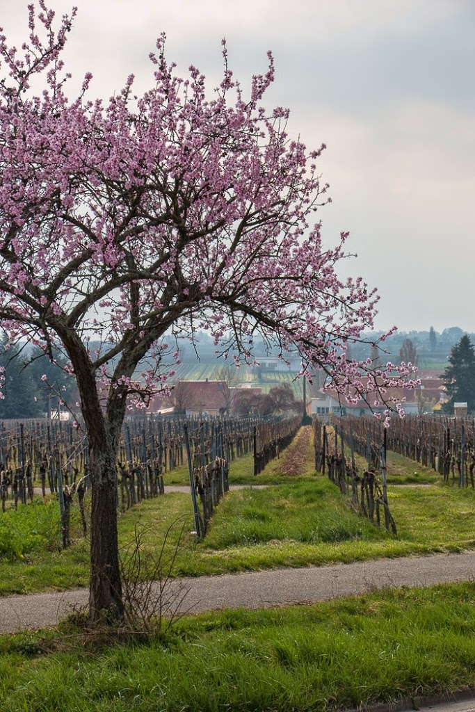 Wine-Country-13
