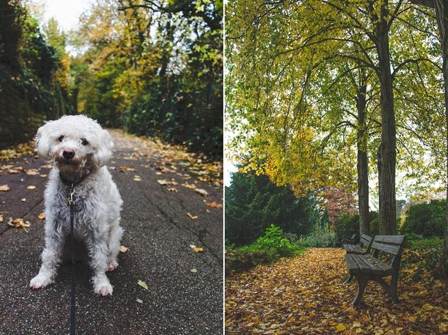 Autumn_Germany-30_Germany.jpg