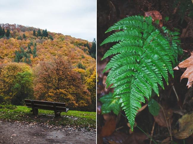Autumn_Germany-32_Germany.jpg