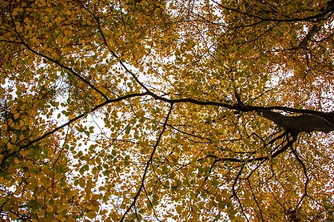 Autumn_Germany-36_Germany.jpg