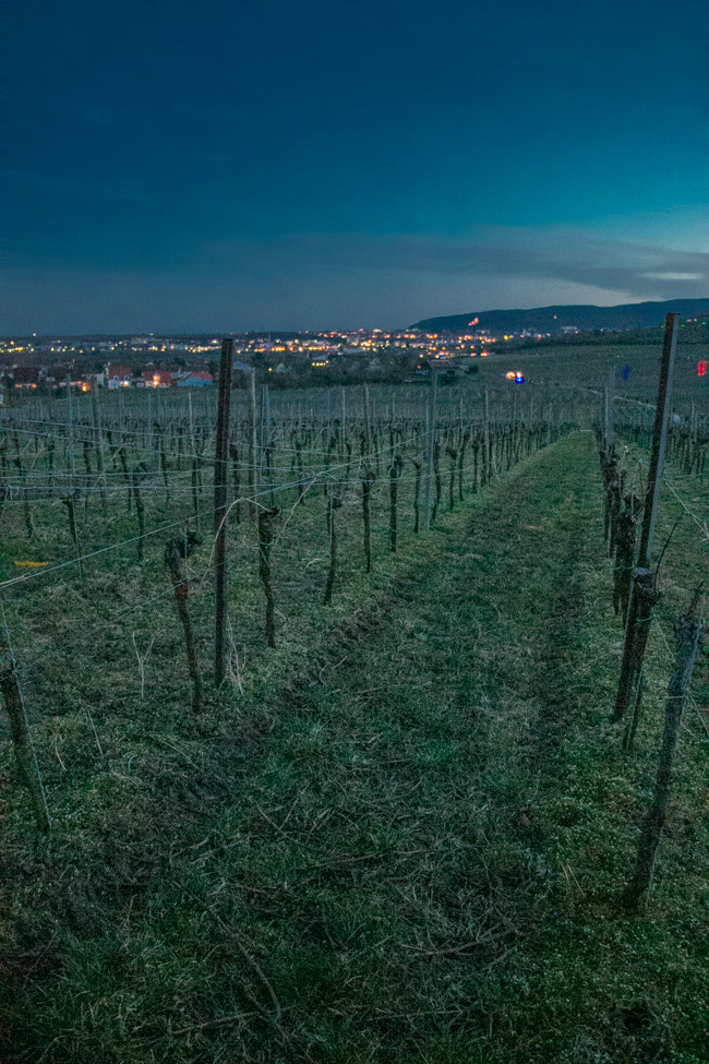 Wine_Walk_BadDurkheim-6