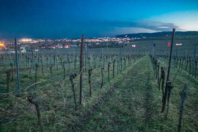 Wine_Walk_BadDurkheim-7