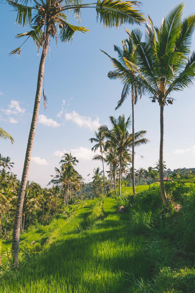 New Bali Tours - The Overseas Escape-20