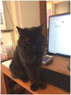 Black cat sits on desk in front of a computer in lodge