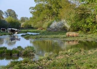 Knepp Wildland Estate, Source: Knepp Wildland