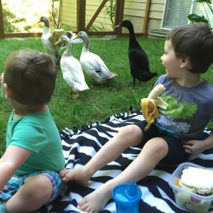 12 Necessities for raising backyard ducks with Free Shopping List Printable