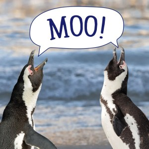 Free Zoo Admission and World Penguin Day!