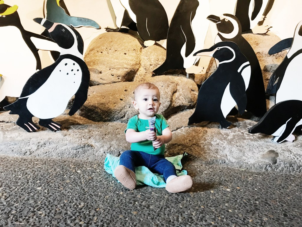 The Oregon Zoo & Stonyfield | How to get free zoo tickets in YOUR area!