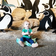 Family Fun Day at The Oregon Zoo