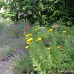Shade Gardening Janet Davis Explores Colour