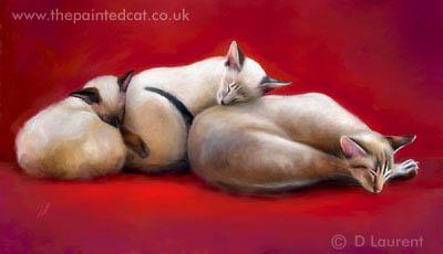Sleeping Siamese Family