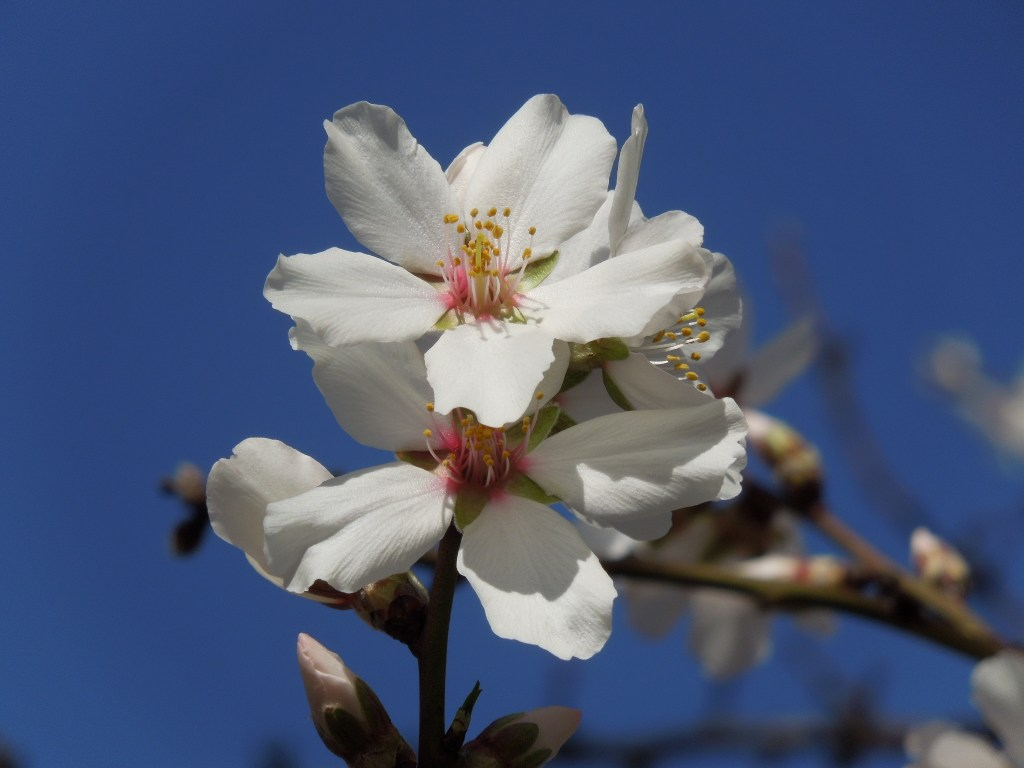Tips for Photographing Trees In Bloom!