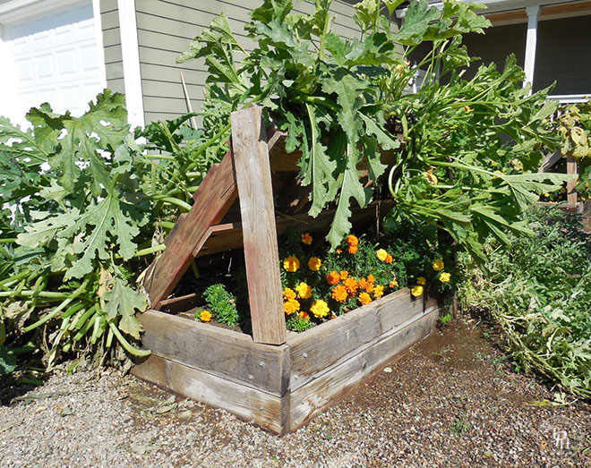 Squash Growing Racks Made Out Of Pallets