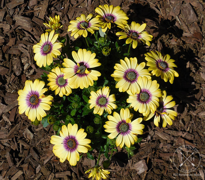 5 Tips for Planting a Colorful Garden