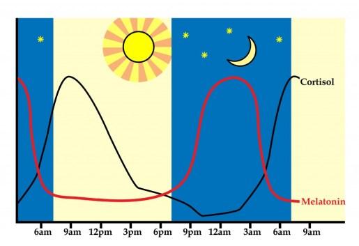 Image result for circadian melatonin cortisol