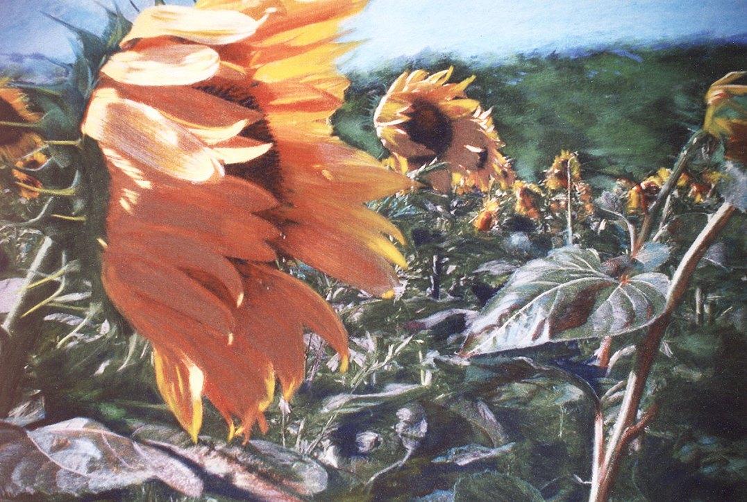 Sally-Trueman-Sunflower-in-the-wind-pastel