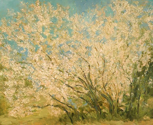 almond_trees_aude