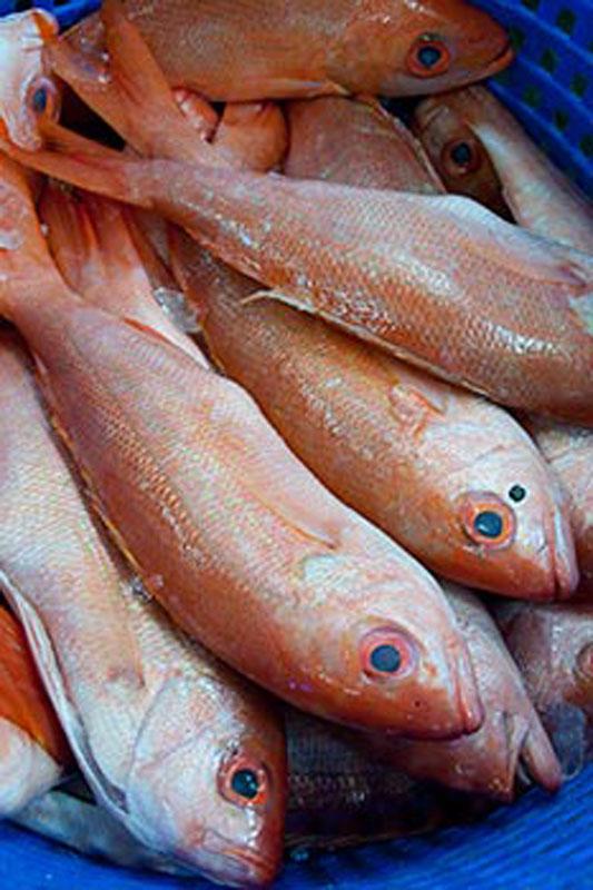 Seafood Market Panama City Beach