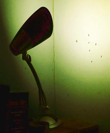 flying ant invasion