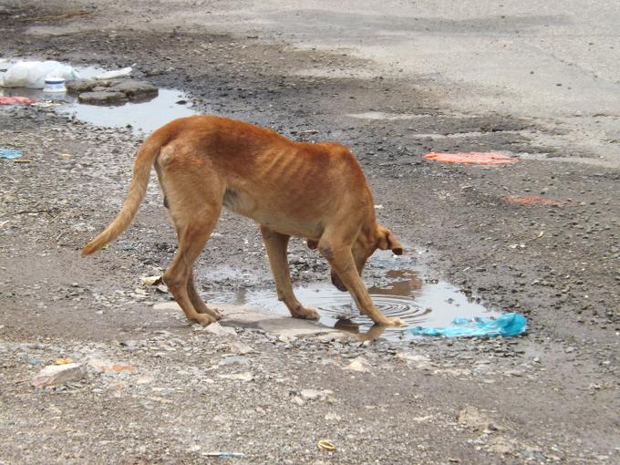dog water