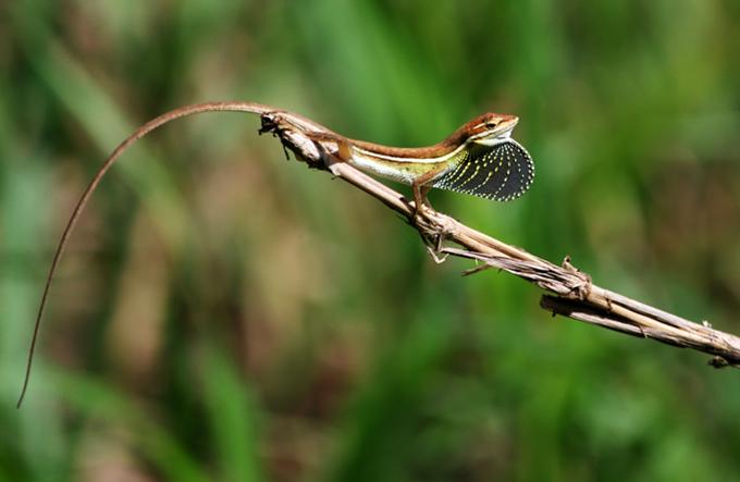 lizard action 1